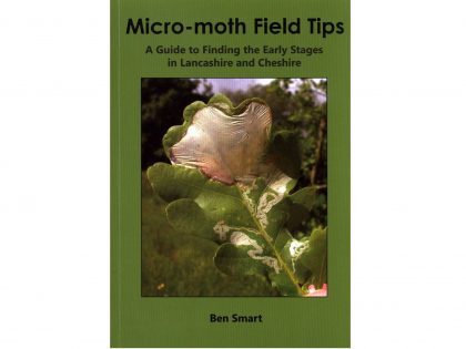 9.598 Micro-moth Field Tips