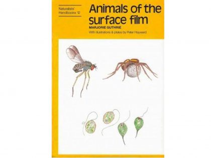 NH13 Animals of the surface film