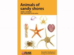 NH21 Animals of sandy shores