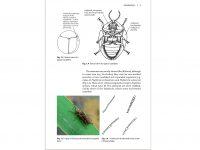 NH34 Leaf beetles binnen2