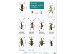 FSC17 Guide to Longhorn beetles