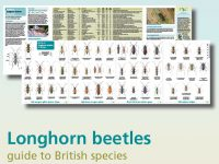 FSC17 Guide to Longhorn beetles binnenzijde