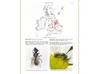 7.294 Bees of British Isles binnen2