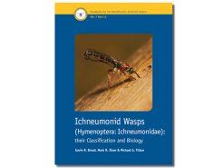 7.347 Ichneumonid Wasps