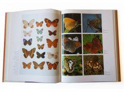 KHB190 Dictionary Butterflies and Moths binnen