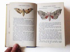 KHB206 Larger Moths binnen