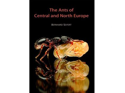7.303a Ants-of-central-and-northern-Europe