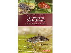 QM04 Die Zikaden Deutschlands