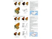 9.508 Guide to the Butterflies of the Palearctic Region blad