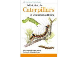 9.053 fieldguide-to-the-caterpillars