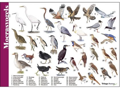 HK041 moerasvogels