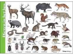 HK042 dieren-in-het-bos