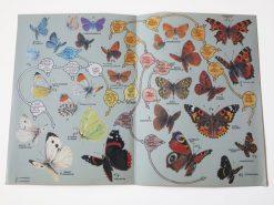 KHB185 zoekkaart Vlinders binnen
