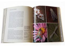KHB190 elzeviers-vlinderboek binnen