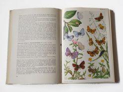 KHB191 Onze Vlinders binnen