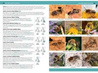 7.905h a comprehensive guide to insects herdruk 2020 binnen1