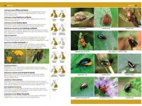 7.905h a comprehensive guide to insects herdruk 2020 binnen2