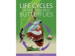 9.487 Life cycles of British and Irish butterflies