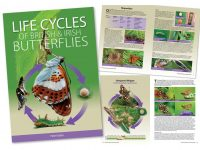 9.487 Life cycles of British and Irish butterflies2
