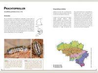 7.927 Landpissebedden van Belgie binnen1