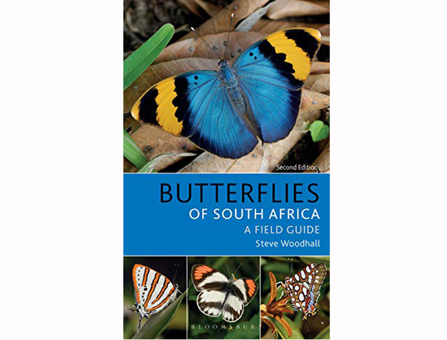 butterflies-of-south-afrika