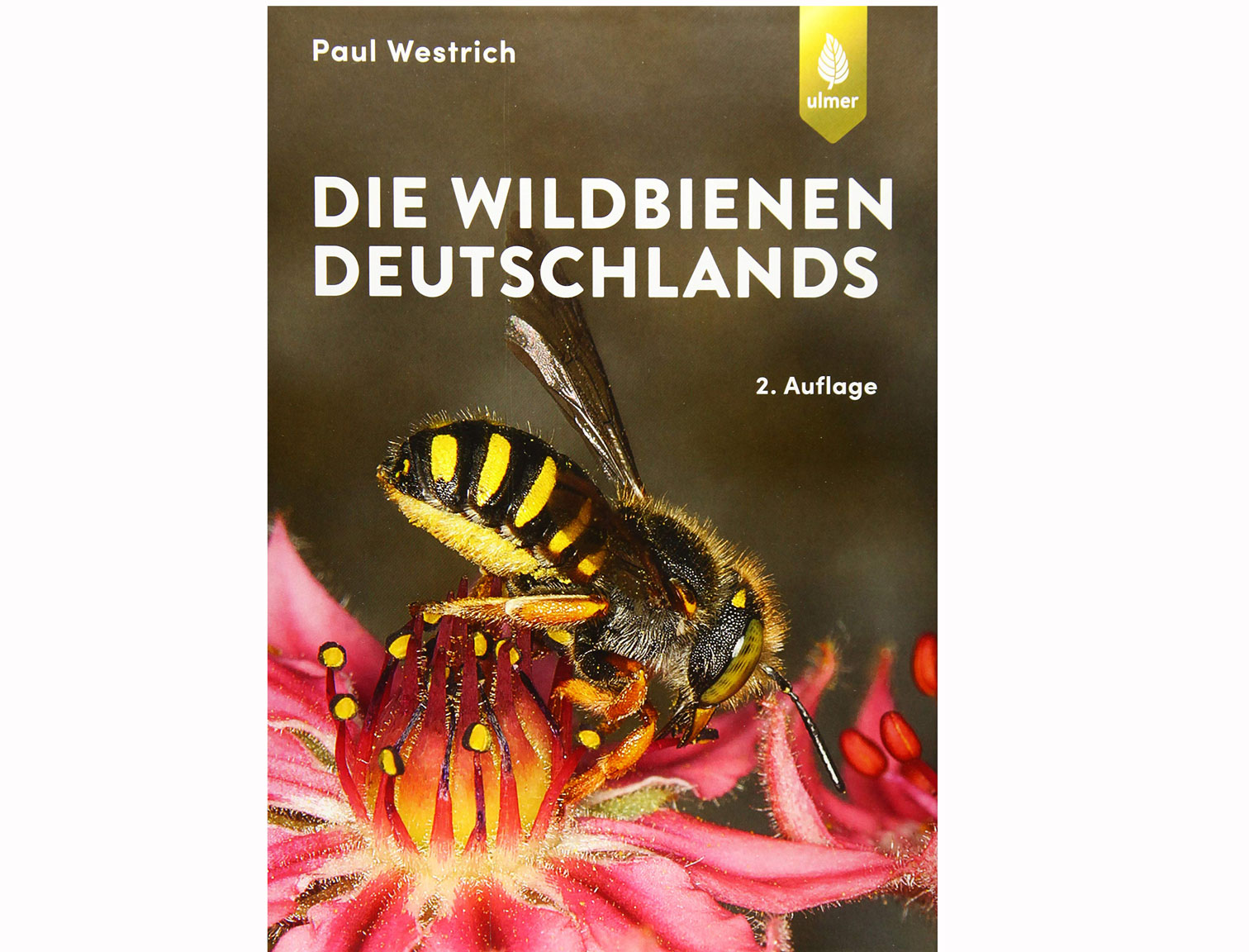 wildbienen-deutschlands-A2