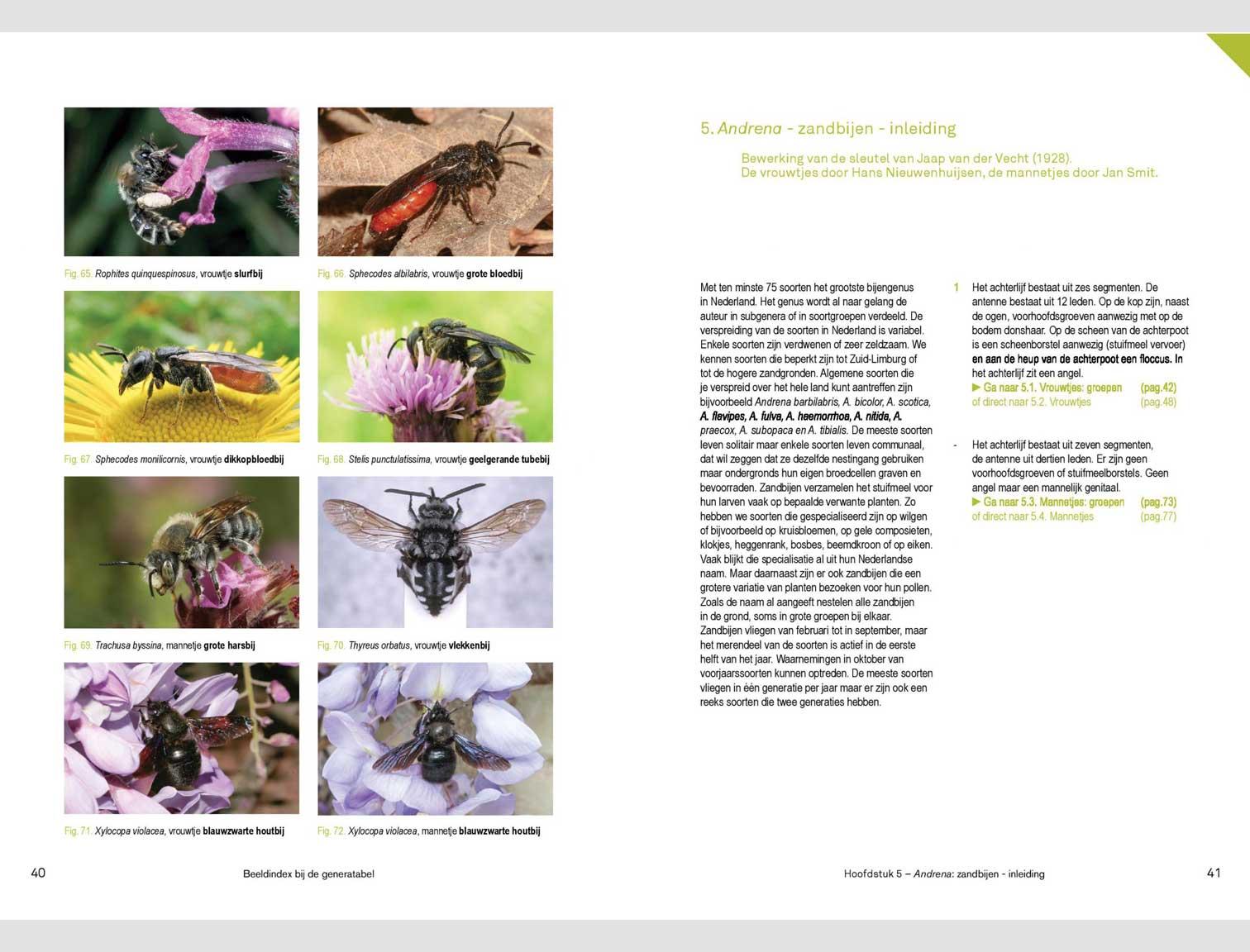 nederlandse-bijen-deel-2.1