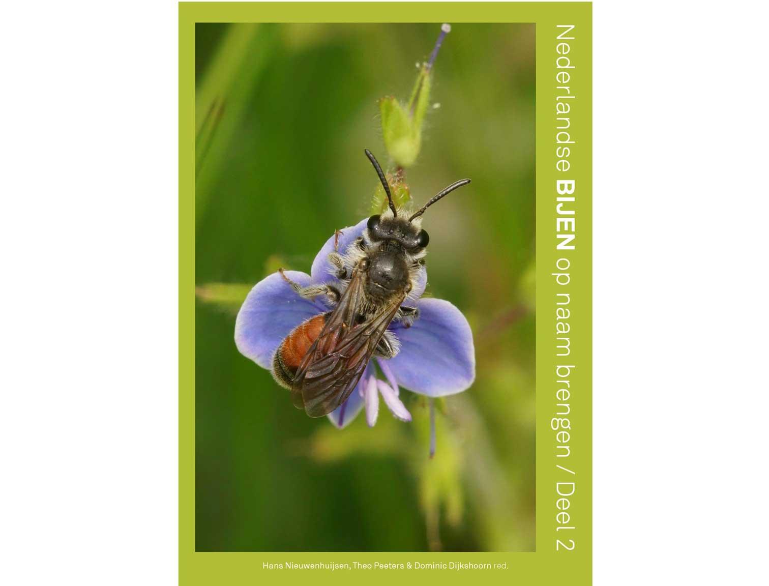 nederlandse-bijen-deel-2