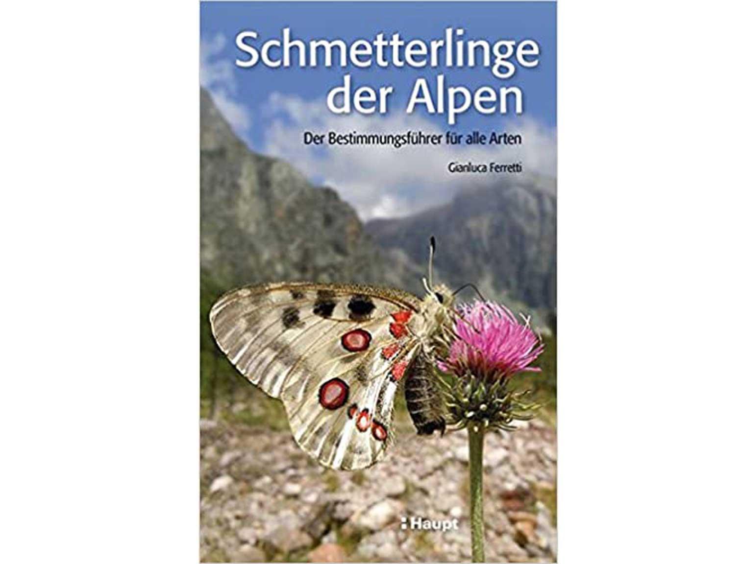 schmetterlinge-der-alpen