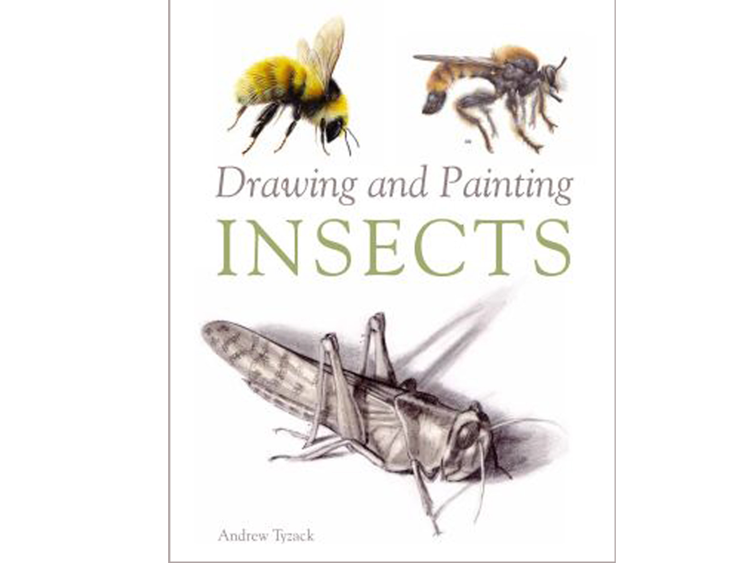 drawing-and-painting-insects