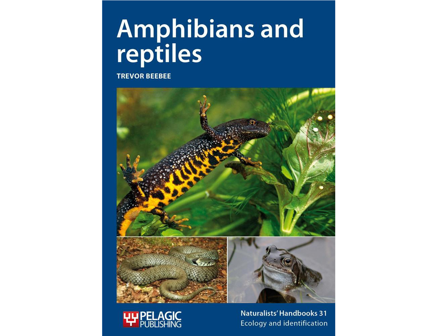 amphibiens-and-reptiles-pelagic