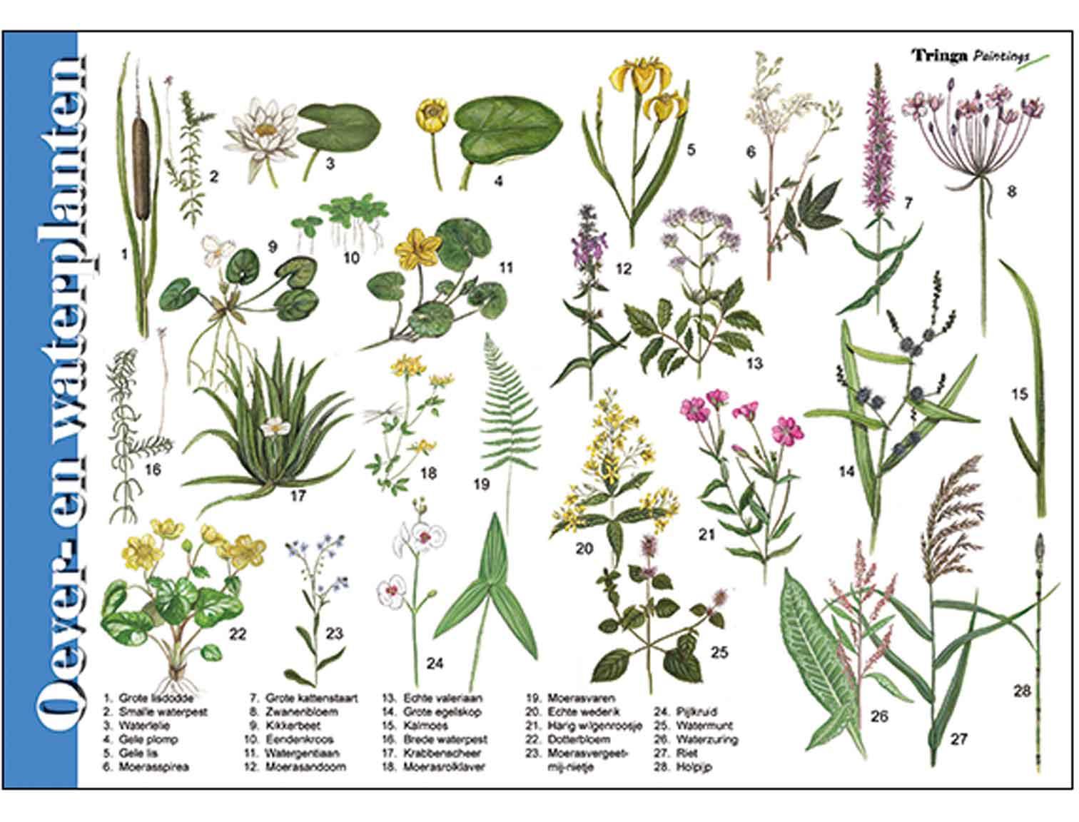 Herkenningskaarten-Oever-en-waterplanten