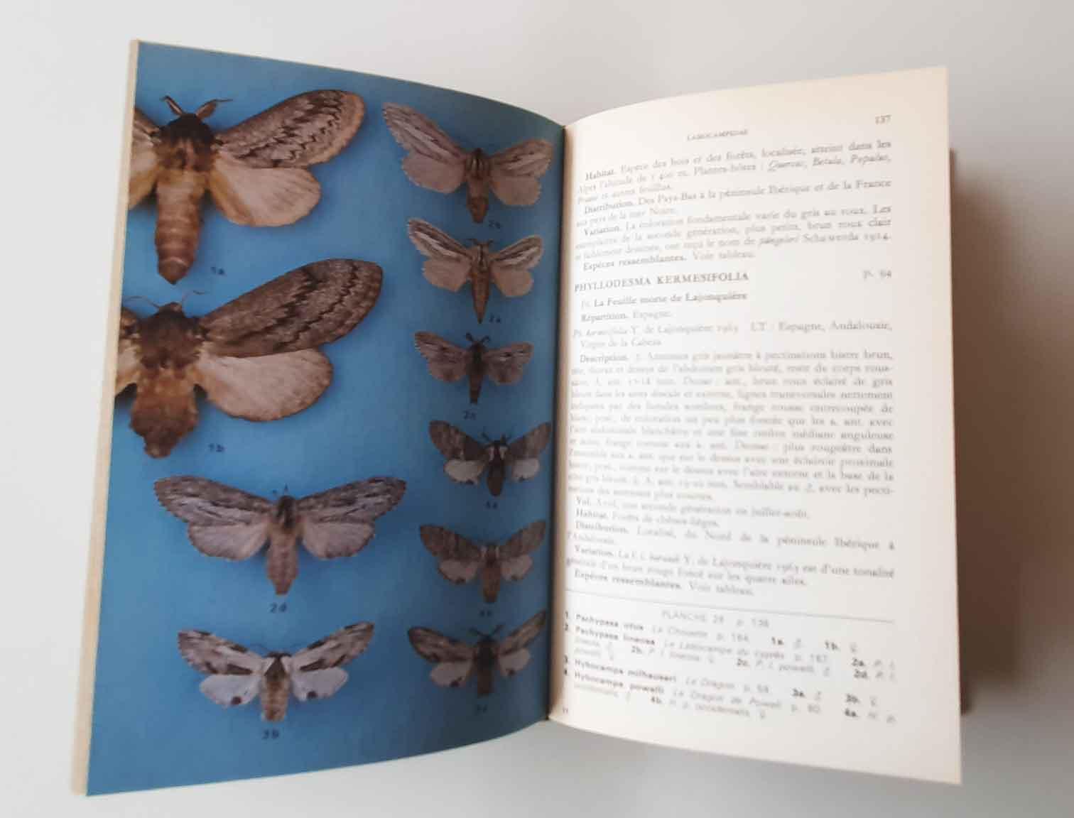 guide-des-papillons-nocturnes1