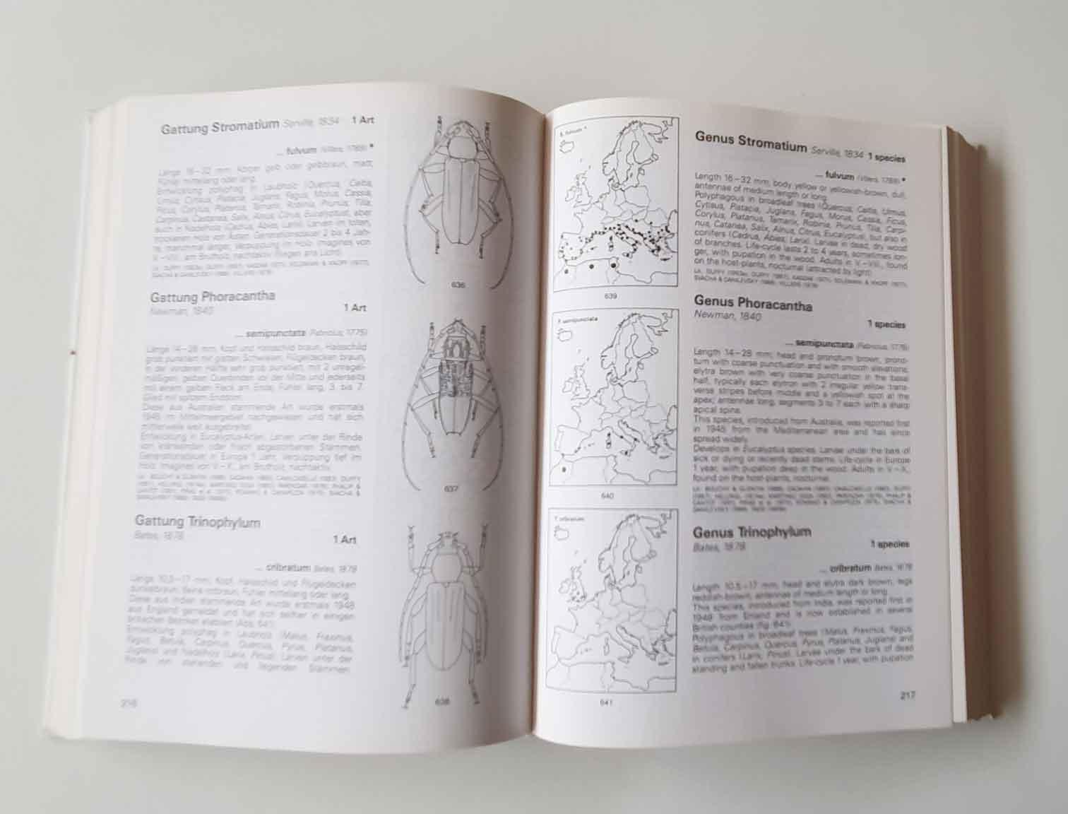 longhorn-beetles2