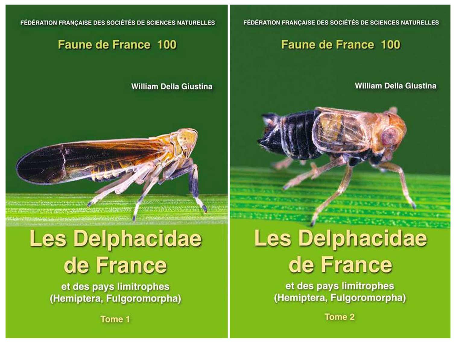 double-couverture-delphacidae